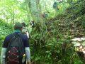 ブナ林の中を散策