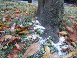 落ち葉も白い布団を覆う