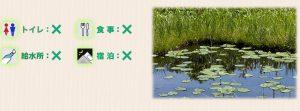 オゼコウホネの咲く池塘