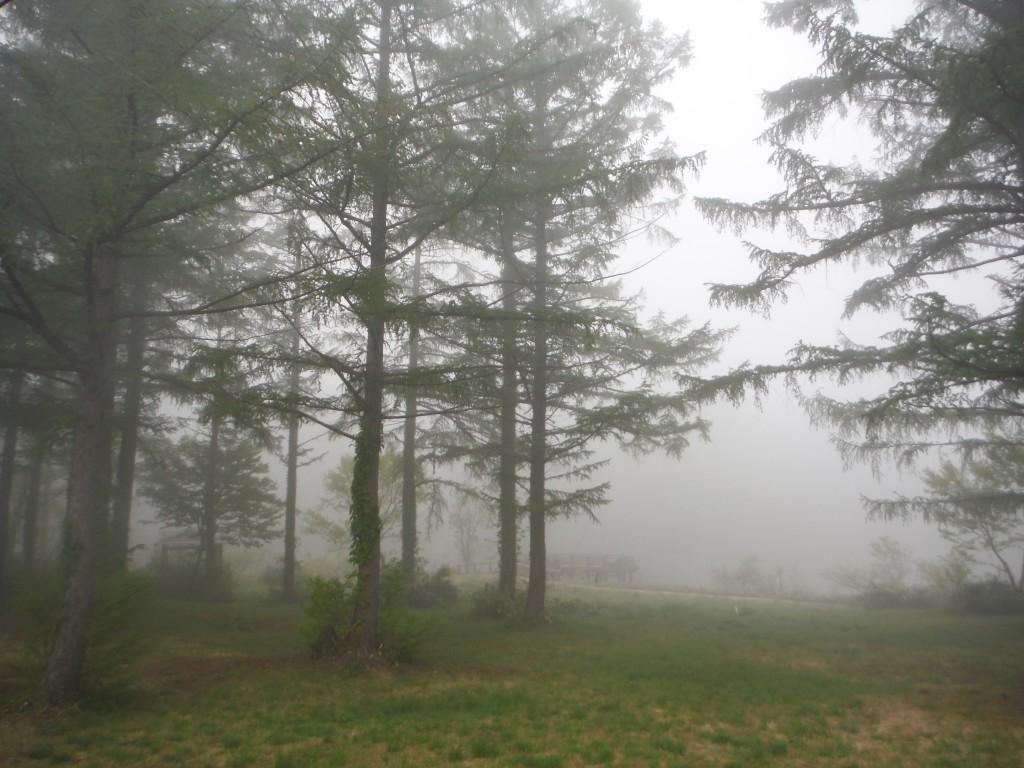 今日の朝は霧。鳥たちの囀りが、響き渡っています。